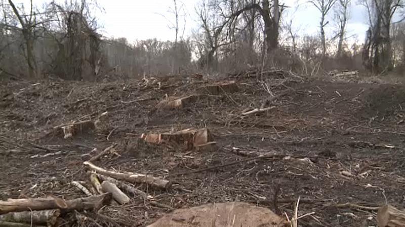 naturschutz_eu_wald_abholzung_ungarn_südliche große tiefebene_umweltschützer