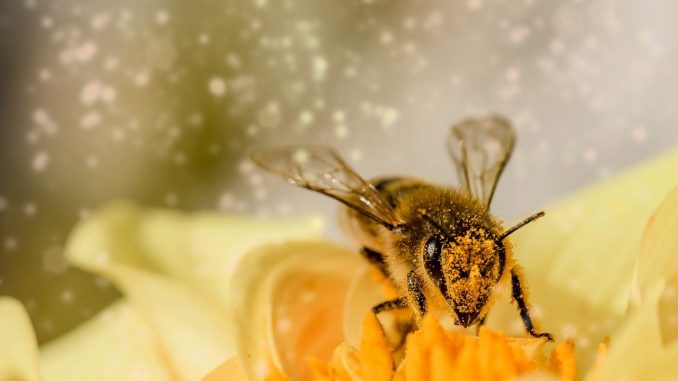 Pollenflugvorhersage