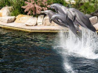 Symbolbild: Delfinanlage im Nürnberger Tiergarten