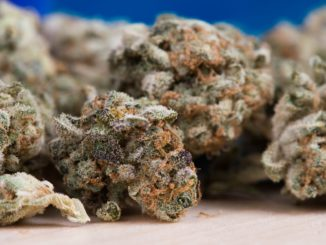 Symbolbild: Marihuana