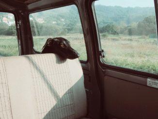 Symbolbild: Hund im geschlossenen Auto