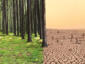 Symbolbild: Klima