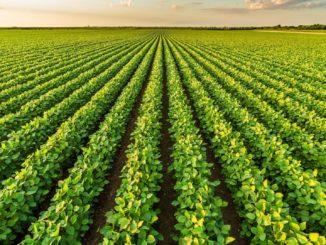 Landwirtschaftlicher Anbau