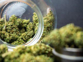 Symbolbild: Marihuana - Bild: LittleIvan via Twenty20