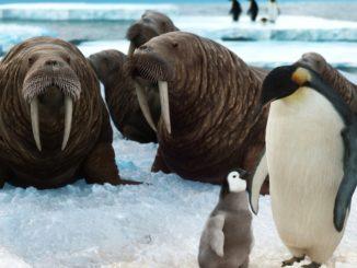 Leben auf dem Nordpol - Bild: Aldrick via Twenty20